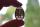 Anhänger Lamellen - Obsidian (Druidenobsidian)