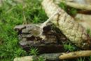 Amulett Anhänger Zauberstab und Kristallkugel,...