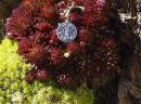 Amulett Anhänger Lebensbaum, Yggdrasil, Silber 925