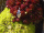 Amulett Anhänger Eichblatt, Oak Leaf, Druiden, Silber 925